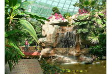 伊人香蕉av在钱森林动物园二期热带雨林馆