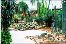 伊人香蕉av在钱森林动物园二期热带雨林馆3