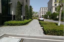 伊人香蕉av在钱国际商务城A区景观绿化工程